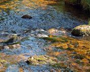 минерална-вода-българия